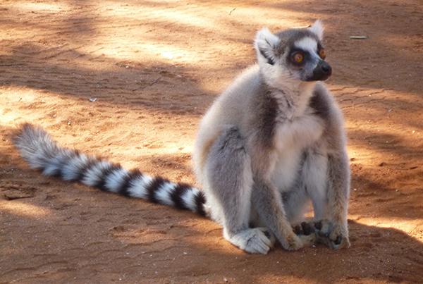 TOUR<br /> MADAGASCAR
